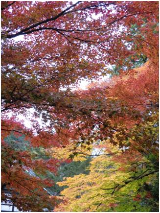 紅葉〜南禅寺〜永観堂〜