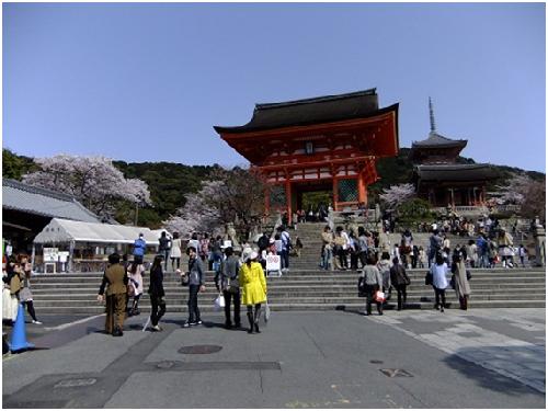 〜京都の桜〜